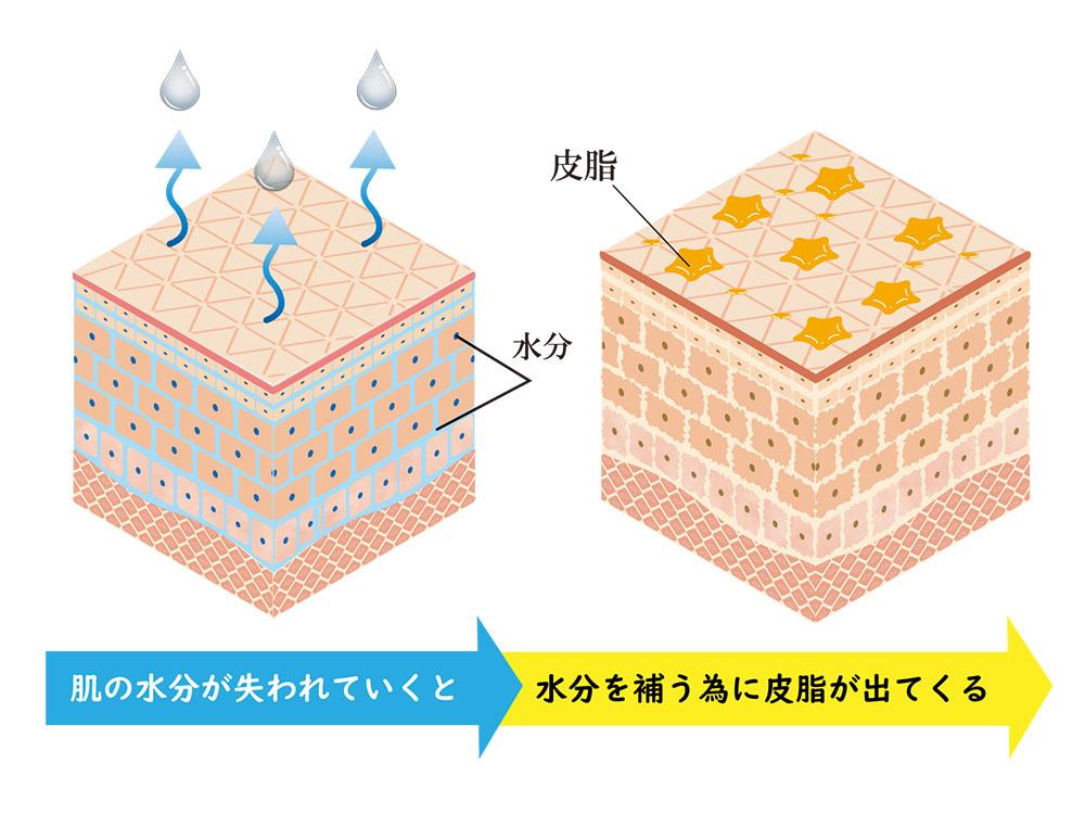 皮脂の分泌量が多く肌の乾燥をまねく