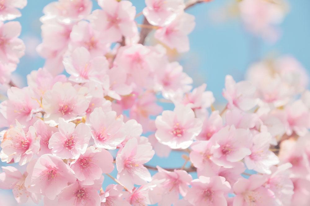 春に肌荒れする原因とは?対策や予防方法を伝授!